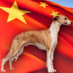 china-dog-racing