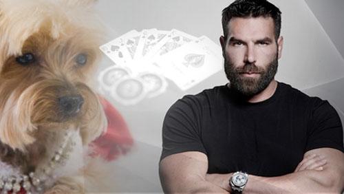 Jilli The Poker Playing Pooch Passes Away; Dan Bilzerian Bluffs JRB off Half a Million