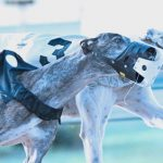 Ladbrokes and SIS sign exclusive greyhound track rights partnership