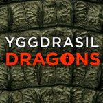 Yggdrasil Dragons ready to invest