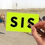 SIS signs greyhound rights deals with Central Park and Henlow
