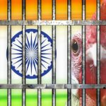 India police arrest roosters as cockfighting ban fails