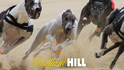 William Hill the first major UK bookmaker to take SIS's 'watch & bet' Greyhound service