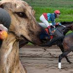 Denmark's horseracing turnover tax disses dogs, pigeons