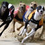 Animal rights group slams Macau Canidrome's proposed move