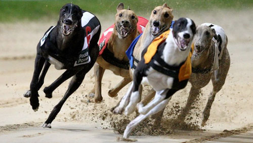 Animal rights group slams greyhound racetrack's proposed move