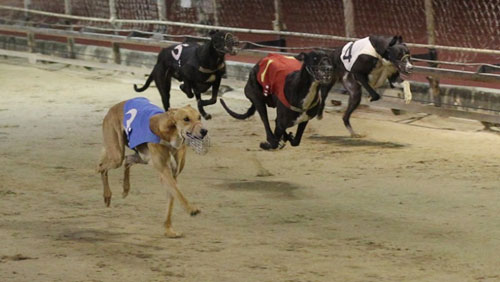 As if 6 months wasn't enough time, the Canidrome requests four-month extension
