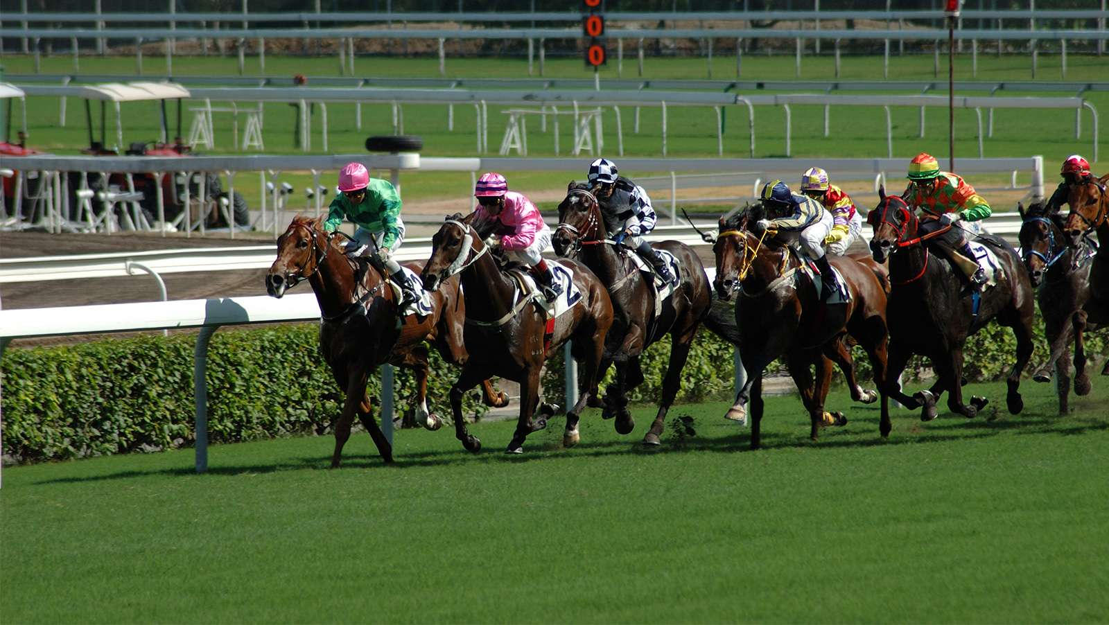 India's RummyCircle to launch gambling site for horse races